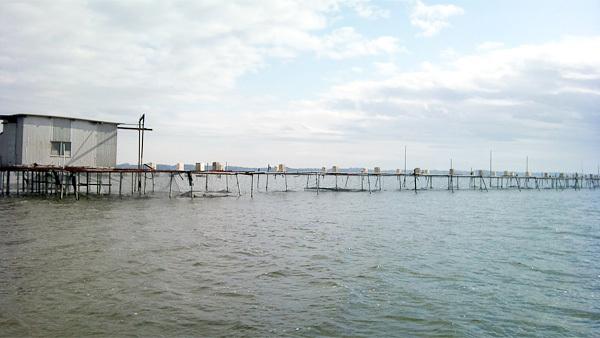霞ヶ浦の鯉の養殖場と給餌機の風景