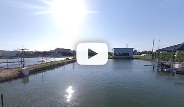 霞ヶ浦の食用鯉養殖場のVR動画