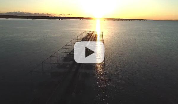 日の出と鯉の養殖場の動画:茨城県かすみがうら市山野水産